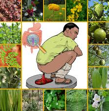 native american plants used for medicine 18 medicinal plants herbs for treating diarrhea