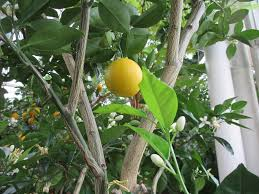 learn to create an indoor orangerie brooklyn botanic garden