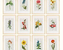 pressed flowers pressed flower etsy