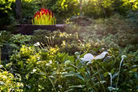 Atlanta Botanical Gardens Membership Mystical World Slated To Take The Atlanta Botanical Garden
