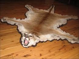 Taxidermy Bear Rug Furniture Amazing Black Bear Shoulder Mount Polar Bear Skin Rug