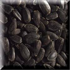 the 25 best black oil sunflower seeds ideas on pinterest black