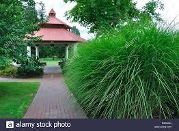 ornamental grass and gazebo in avon connecticut new
