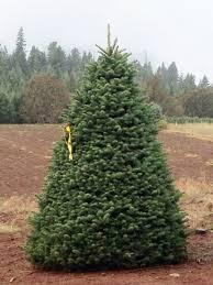 trees btn of oregon