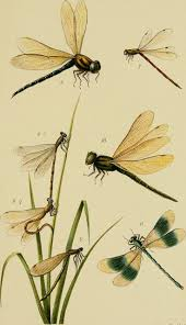 top 25 best dragonfly illustration ideas on pinterest dragonfly