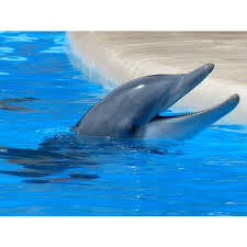 compare prices on dolphin fleece fabric online shopping buy low