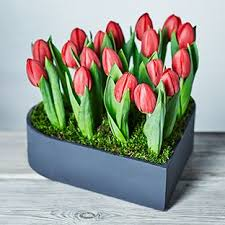 Valentines Flowers - valentine u0027s day flowers waitrose florist