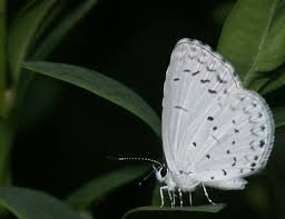 black and white butterfly by 2112 on deviantart