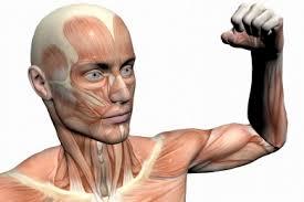 muskelschwäche muskelschwäche die myasthenie kann je nach ausprägung als