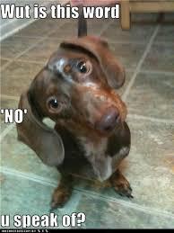 Wiener Dog Meme - 360 best dachshund memes images on pinterest dachshund dog