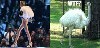 Ostrich Meme - miley ostrich cyrus miley cyrus know your meme
