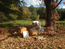 an on demand service for honey bees best bees has thought of that