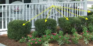 Small Shrubs For Front Yard - landscaping shrub suggestions flowers irrigation spring