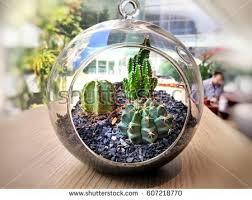 terrarium plant stock billeder royaltyfri billeder og vektorer