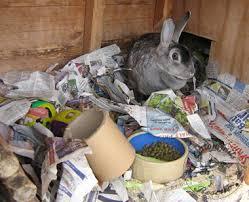 Rabbit Hutch For 4 Rabbits Rabbit Care Cottontails Rabbit U0026 Guinea Pig Rescuecottontails