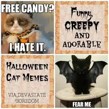funny halloween cats for a laugh fridayfrivolity devastate boredom