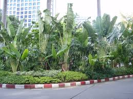 bangkok home decor shopping lush tropical gardens and waterfall at the dusit thani hotel