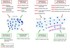 semaphorin signaling in cancer cells and in cells of the tumor