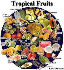 best 25 tropical fruits ideas on pinterest tropical tropical