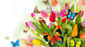 wallpaper butterfly flowers tulips 4k nature 14993