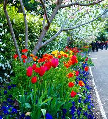 the spring walk royal botanic gardens sydney