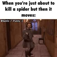 I Tried Killing A Spider - best 25 spider humor ideas on pinterest pictures of spiders