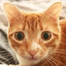 super epic cats home facebook