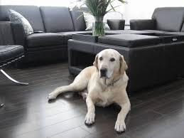 What Is Laminate Floor Laminated Flooring Exciting Laminate Vs Wood Simple Furniture