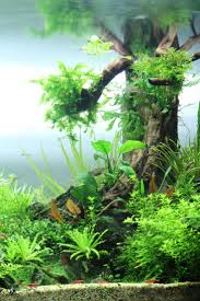 268 best aquascaping u0026 tropical fish tanks images on pinterest