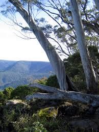 Mount Lindesay Highway Wikipedia Barrington Tops National Park Wikipedia