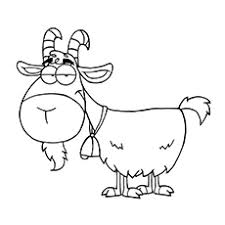 top 25 free printable goat coloring pages online goats cartoon