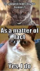 Grumpy Cat Yes Meme - 1304 best grumpy cat images on pinterest ha ha grumpy cat and