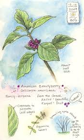 Florida Native Plant Society Blog Keeping A Visual Nature Journal