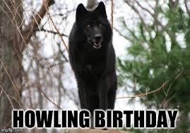 Wolf Meme Generator - black wolf memes imgflip
