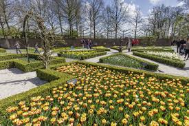 the largest tulip garden in holland opens for the season