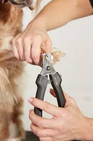andis premium dog nail clipper large chewy com