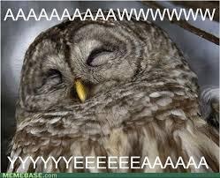 Art Student Owl Meme - c8h10n402