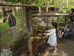 san antonio zoo cutting admission cost for locals tuesday san