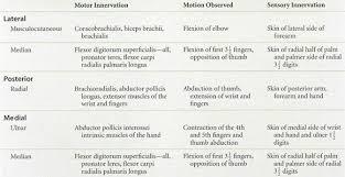 Bicep Innervation Infraclavicular Brachial Plexus Block Anesthesia Key