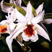 white dendrobium orchid painting by alfred ng