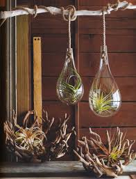 Modern Hanging Planter by Mid Century Modern Air Hanging Planter For Tillandsia Air Plant