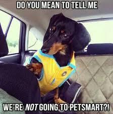 Wiener Dog Meme - dachshund meme dachshund puppies miniature dachshunds dog memes