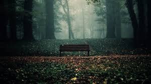 Bench Photography Bench In Woods Wallpaper 6892683