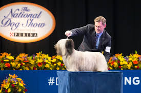 Dog Show Thanksgiving Day 2016 National Dog Show Carson International Inc