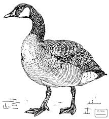 birds duck with clothes gooses coloring pages colorpages7 com
