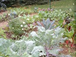 plant a fall garden and grow veggies far beyond summer u2014 veggie