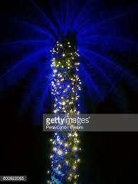 palm tree with christmas lights stock photo getty images
