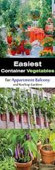 easy container vegetables for balcony u0026 rooftop garden container