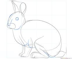 how to draw a rabbit step by step drawing tutorials