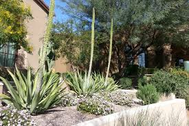Desert Backyard Landscape Ideas Desert Landscaping Ideas For Sleek Look Home Decor U0026 Furniture